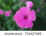 purple flower close up on... | Shutterstock . vector #722627485