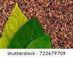Three Tobacco Green  Leaf On...
