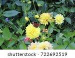 botanical garden in augsburg ... | Shutterstock . vector #722692519