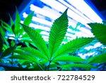 growing marijuana  pot and weed.... | Shutterstock . vector #722784529