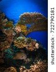 underwater beauty of the nature.... | Shutterstock . vector #722790181