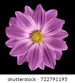 pink  flower daisy on the black ... | Shutterstock . vector #722791195