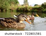 duck on the lake | Shutterstock . vector #722801581