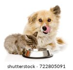 Stock photo kitten and licking hungry dog eat together isolated on white background 722805091