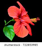 flower of hibiscus isolated on... | Shutterstock . vector #722853985