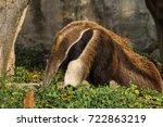 anteater | Shutterstock . vector #722863219
