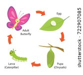 Stock vector vector illustration of life cycle of a butterfly 722907085