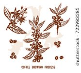 set of branch coffee painted by ... | Shutterstock .eps vector #722983285