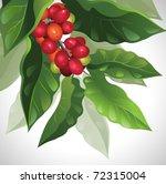 branch of ripe coffee | Shutterstock .eps vector #72315004