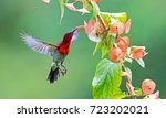 the colorful bird and beautiful ... | Shutterstock . vector #723202021