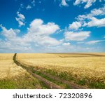 rural road inside field of wheat - stock photo