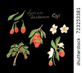 goji berry  lycium barbarum | Shutterstock .eps vector #723253381