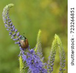 beautiful bug sits on a blue... | Shutterstock . vector #723266851