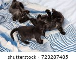 Stock photo three little kittens playing together 723287485