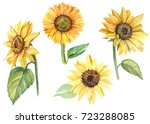 Set Sunflowers  Watercolor...