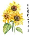 bouquet of sunflowers ... | Shutterstock . vector #723288121