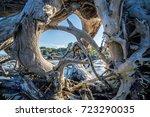Fallen Trees On Jekyll Island ...