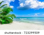 Stock photo sunny summer landscape waterfront seashore overlooking the palm tree 723299509