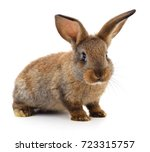 Small Brown Rabbit Isolated On...