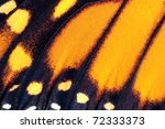Butterfly Wing  Monarch ...
