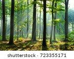 forest landscape | Shutterstock . vector #723355171