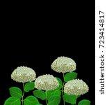 Flower Hydrangea Isolated On...