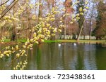 Flowering Willow Branches On A...