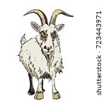 Grumpy Goat Cartoon Image....