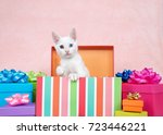 Stock photo white kitten with heterochromia eyes one blue one yellow green popping out of a striped colorful 723446221