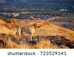 yellow labrador hiking in the... | Shutterstock . vector #723529141