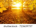 autumn leaves on the sun and... | Shutterstock . vector #723639757