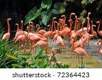 caribbean flamingos | Shutterstock . vector #72364423