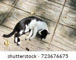 Stock photo sleeping cat 723676675