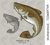 atlantic cod. vector...