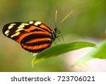 Doris Longwing Butterfly ...