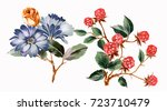 elegant flowers  the leaves and ... | Shutterstock . vector #723710479