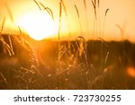 warm autumn background with... | Shutterstock . vector #723730255
