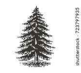 Engraved Fir Tree. Vector...