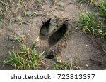 Footprint Of The Wild Boar On...