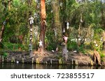 Xochimilco Is An Island Of...