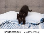 Stock photo tiny little kitten looking up while relaxing on bed 723987919