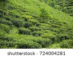 green tea plantation near ilam... | Shutterstock . vector #724004281