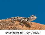 Agama Lizard On Rock Against...