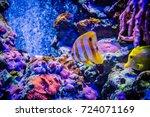 marine aquarium | Shutterstock . vector #724071169