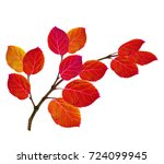 bright colorful autumn leaves...   Shutterstock . vector #724099945