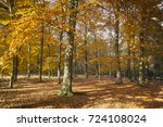 sunny forest landscape with... | Shutterstock . vector #724108024