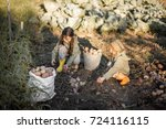 the children on the harvest of... | Shutterstock . vector #724116115