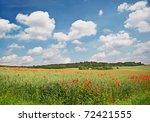 Poppy Field. Landscape