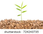 growing plant with underground... | Shutterstock . vector #724243735