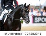 horse stallion rider in step at ...   Shutterstock . vector #724283341
